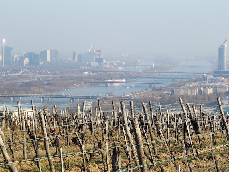 The grapes and the Danube