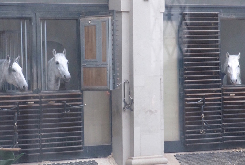 Also in the Hofburgcomplex area is the stable of the Lipizzaner horses